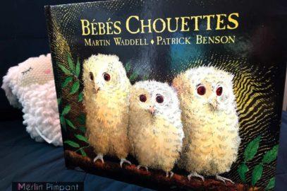 livre enfant - absence-séparation - bébés chouettes